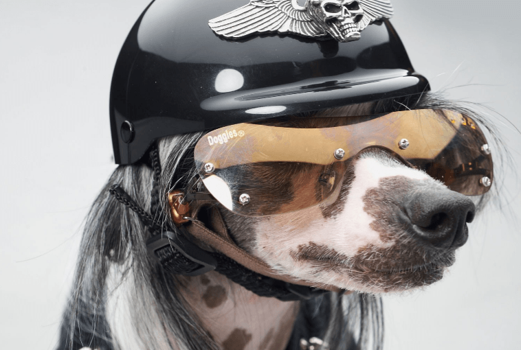 Helmets for Dogs