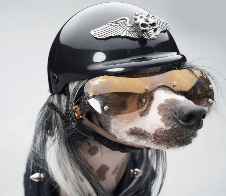Large Dog Accessories For Motorcycles