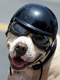 Helmets for dog