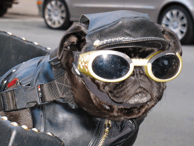 https://www.motorcyclesafer.com/wp-content/uploads/2017/05/Motorcycle-Helmets-for-Dog.png