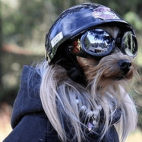 Motorcycle Helmets for Dogs