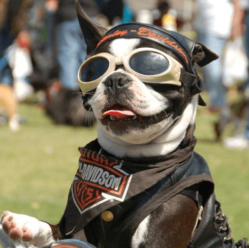 Motorcycle Helmets For Dogs – Protecting Your Best Friend ...